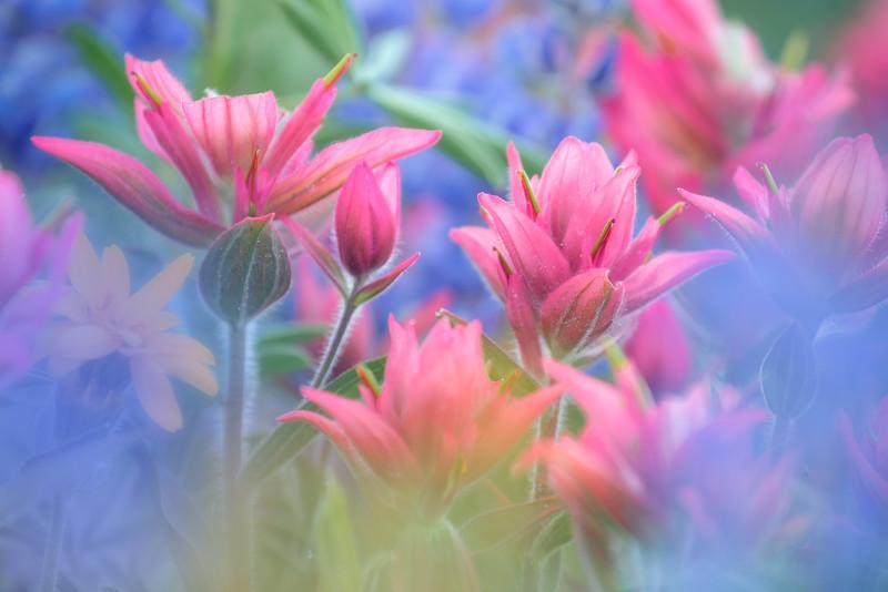 """Bokeh Bouquet"""