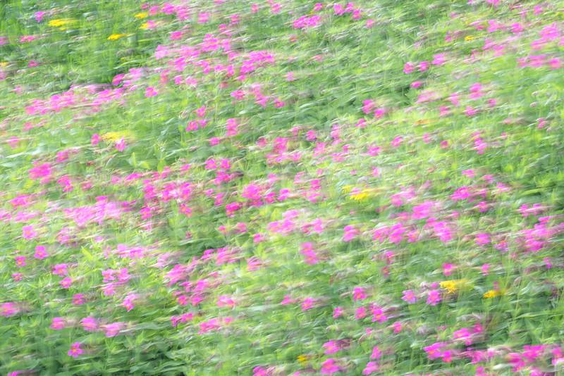 """Floral Impressions"""
