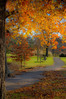 Soft Fall Hues, by David Everett