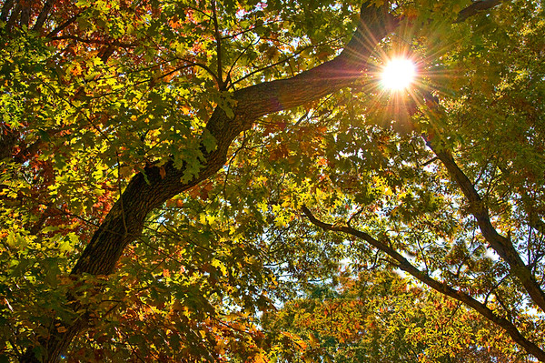 Sunburst through leaves, Elizabeth Park     - Hartford, CT