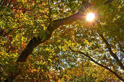 Sunburst through leaves, Elizabeth Park     - Hartford, CT