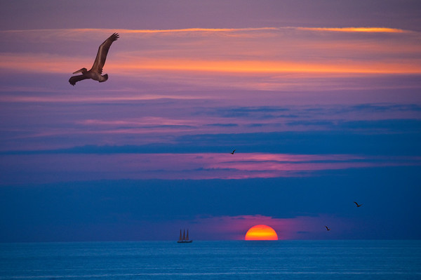 Pelican Sunset, by David Everett