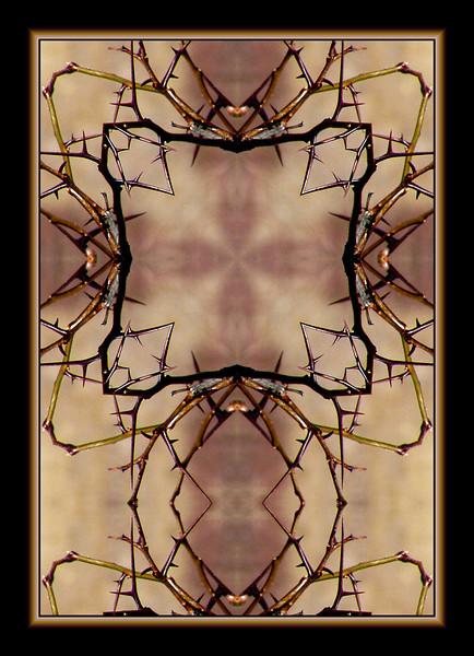 thorns, Homestead National Monument of America, Beatrice, Nebraska