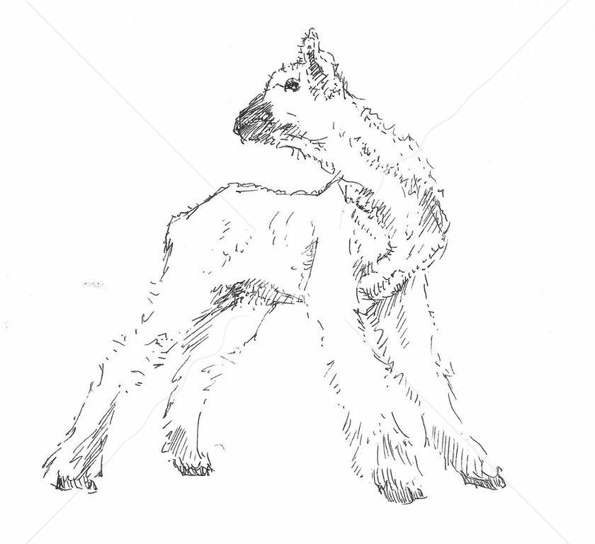 Lamb by jjaspersen