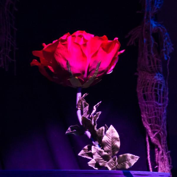 Campo choir BATB 3.14 Rose