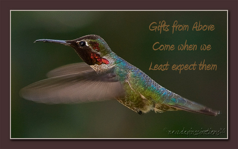 Hummingbird - Gifts from Above