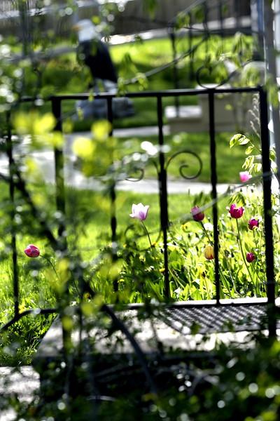 flowe fence