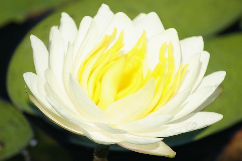 flower4u