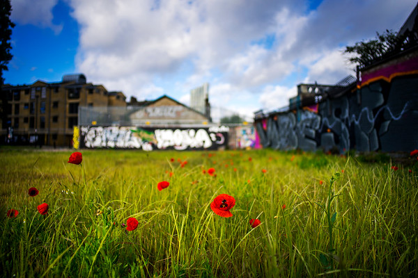 Spitalfields Poppies, Old Shoreditch Station