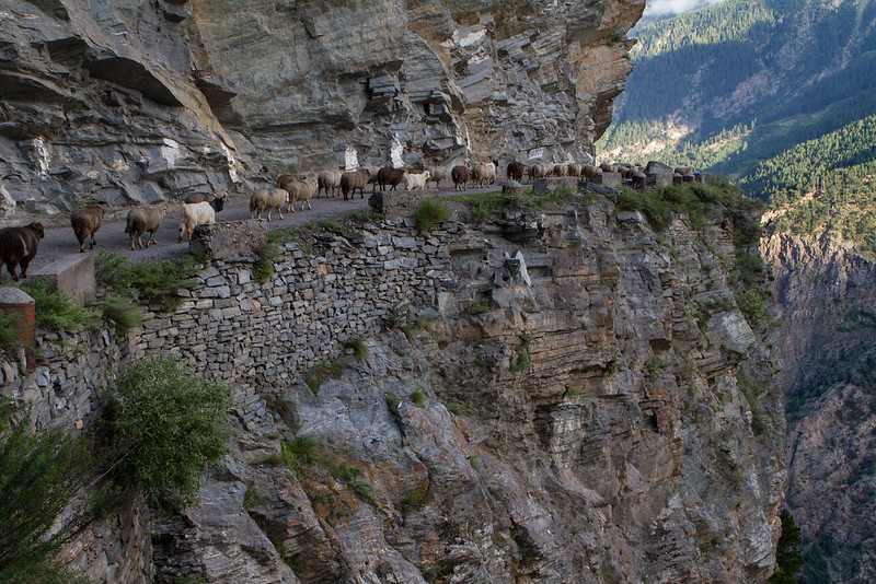 Near Kalpa village (Kinnaur).
