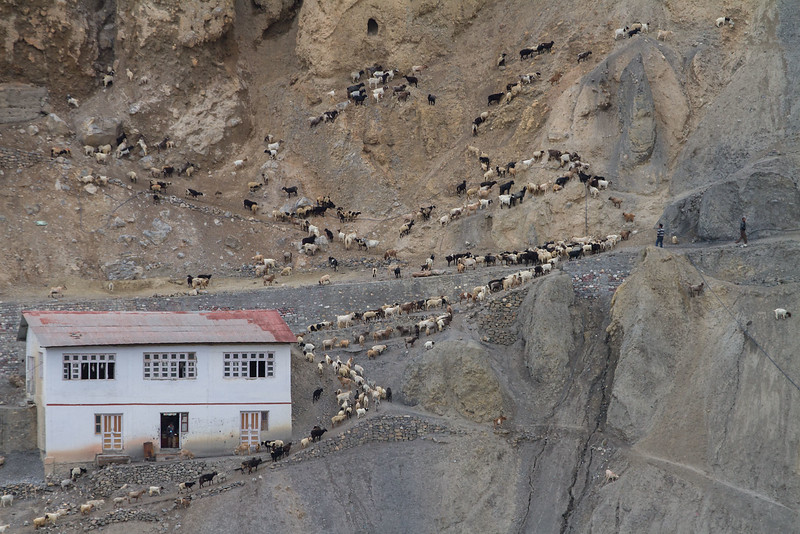 Dhankar village (Spiti).