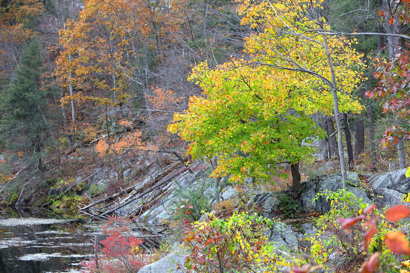 Autumn Scenes (Sandy Tambone)