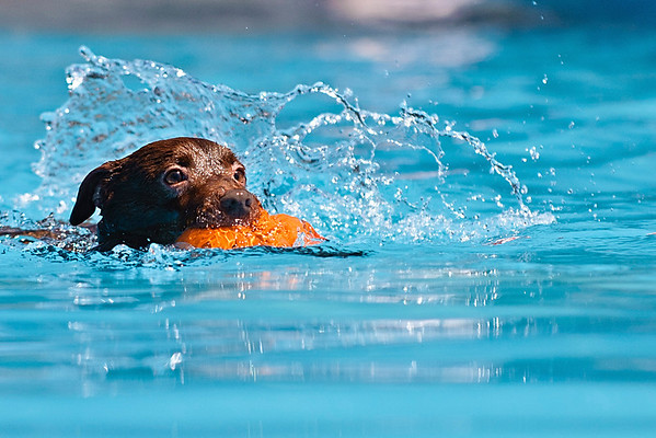 Splash Dogs Jump for Cash - 2012