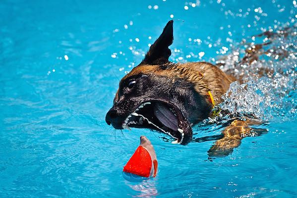 Splash Dogs Western Feed & Pet Store - Folsom June 2012
