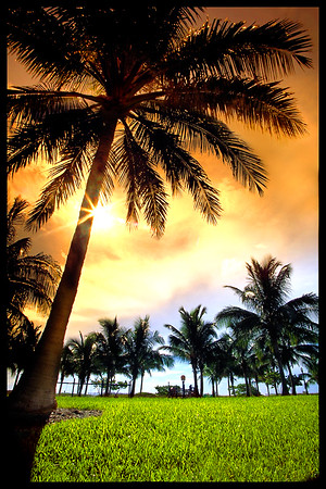 A sunrise palm tree in front of our Miami hotel.  Some dudes tried to steal my camera gear as I was setting up to take this picture!