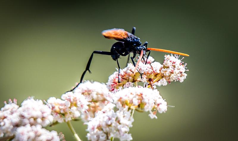 Spledid.bugs