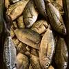 Fish Market - Oblade