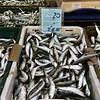 Fish Market - Sardines