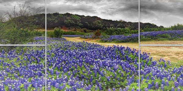 Storm Over Bluebonnet Panels