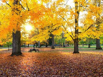 Autumn in Corbin Park