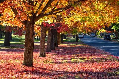 October 4 (Corbin Park) 001-Edit