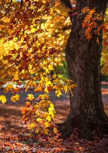October 4 (Jenna, Karsen, & Corbin Park) 466-Edit