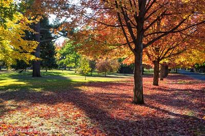 October 4 (Jenna, Karsen, & Corbin Park) 439-Edit