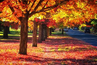 October 4 (Corbin Park) 001-Edit-2