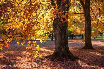 October 4 (Jenna, Karsen, & Corbin Park) 462-Edit
