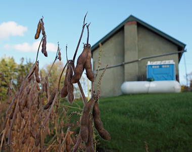 Tyrone Town Hall and soybeans