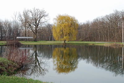 Looking north at the pond in Clarendon Township Park