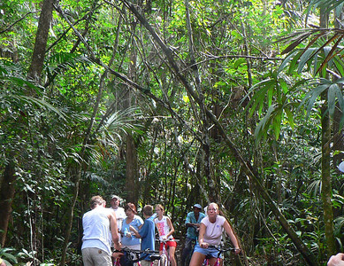 cycling-tropical-forest051110crP1010113