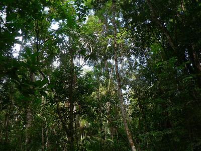 canopy051110P1010116