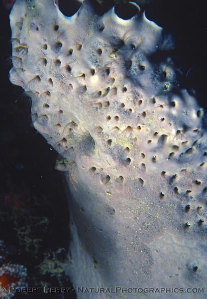 grey sponge & symbionts 1983-09 Malibu
