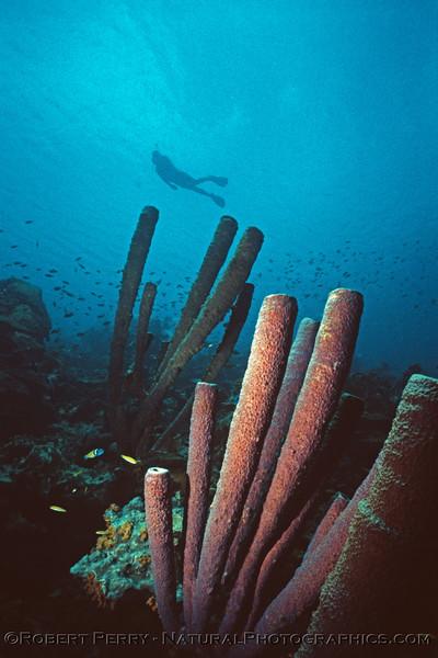 organ pipe sponges & Suellen Log 1135 1985-08 Bonaire-001