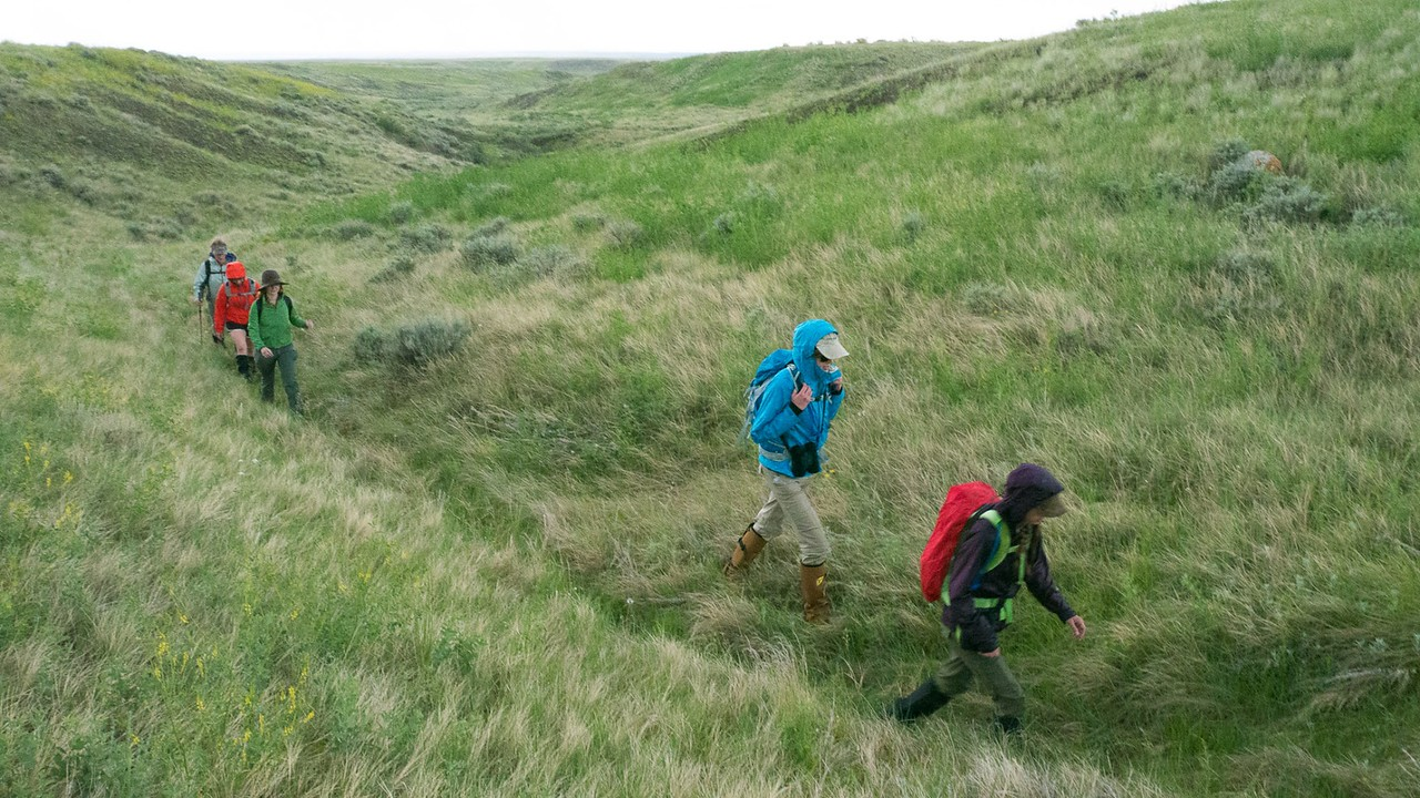 The June 2014 walks out from a coulee during a rainstorm. PHOTO BY MIKE QUIST KAUTZ