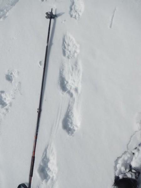 Wolverine Track