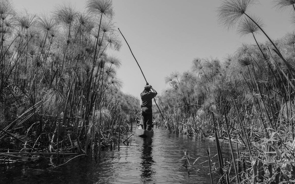 A Bayei tribesman poles through the Okavango Delta, Botswana, during an exploratory mission in the  newest UNESCO World Heritage Site. The Okavango is threatened by development upstream in Namibia and Angola, and Adventurers and Scientists for Conservation is working alongside the Okavango Wilderness Project to place remote research platforms throughout the delta to monitor the health of this habitat from the front lines.