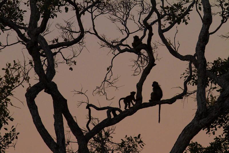 Okavango Wilderness Project 2014 photos-121