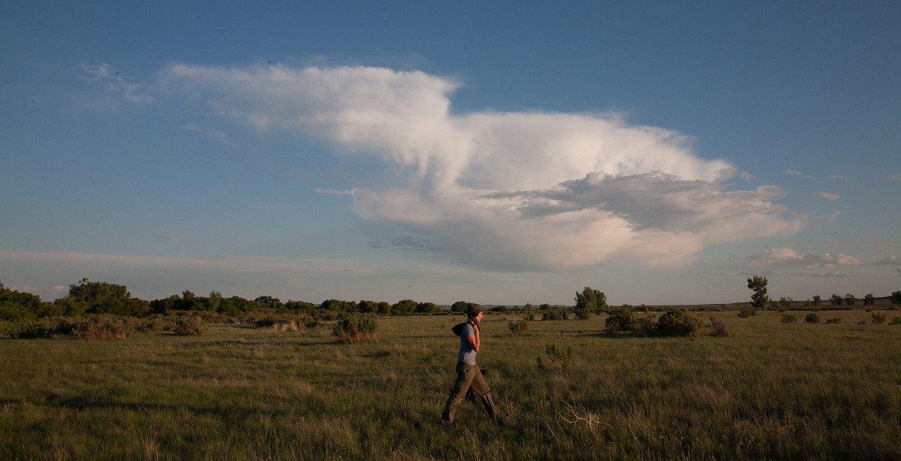 """Adventure scientist Shannon Rebinski takes an evening walk with her camera after a long day collecting wildlife data for the Adventurers and Scientists for Conservation Landmark project. Shannon and her crewmates provide key information for conservation management on the American Prairie Reserve. Learn more -->  <a href=""""http://www.adventurescience.org/landmark"""">http://www.adventurescience.org/landmark</a>"""