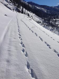 Wolverine Tracks 2