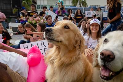 2018_11_03, Beach, Beach Bed In, Bed In, Bed In on the Beach, Come Together, Come Together Miami, Dog, FL, Florida, Lauryn Lima, Miami, Miami Beach, The Betsy, The Betsy Hotel