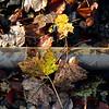 Løvfald på Grenåbanen, efterårsblade<br /> <br /> © Foto: Jens Hasse/Chili<br /> Dato: 10.11.06<br /> Chili foto & arkiv