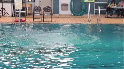 2014 03 23 - nage synchronisée - maître débutant