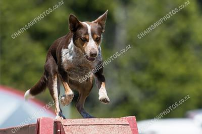 2015 01 24 DAWG Dog Agility
