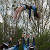 Cheerleaders - Hannover Grizzlies gegen Hannover Spartans