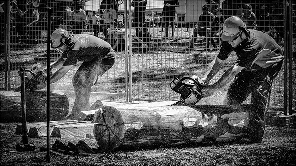 The Chainsaw Race