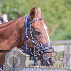 Leadenham_Polo_2018_GR_00011