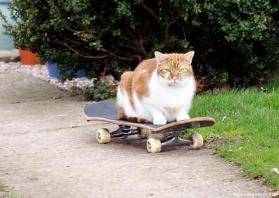 Cats 002