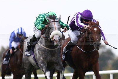 Ryan Moore and The Grey Gatsby defeat Joseph O'Brien on Australia in a thrilling finish in the Irish Champion Stakes at Leopardstown (September 2014)